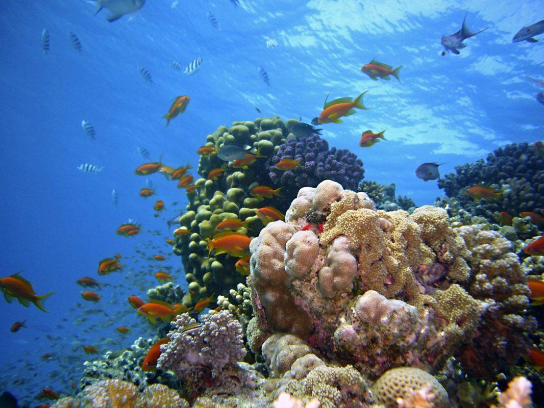 Recifes de corais estão morrendo