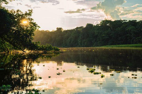 Biodiversidade amazônia