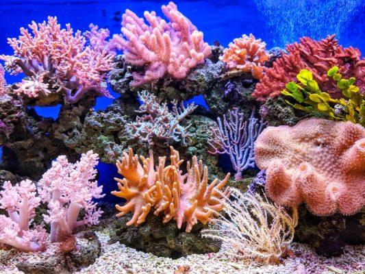 biodiversidade corais