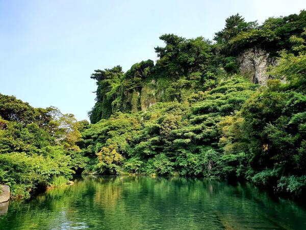 Dia da Proteção às Florestas: imagem de uma floresta tirada do meio de um rio