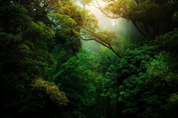 Dia da Proteção às Florestas